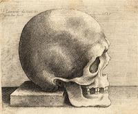 Right profile of a skull