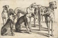 Six hounds