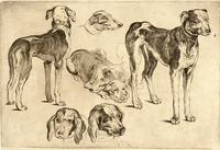 Studies of hounds