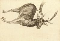 A dead fallow buck
