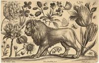 Lion and tulip
