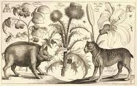 Boar and mastiff