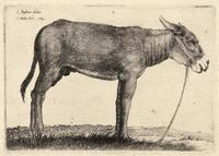 Donkey, after Bassano