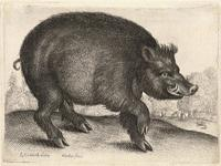 Boar, after Cranach