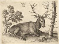 A stag lying, after Dürer