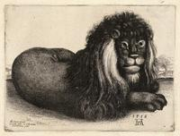A recumbent lion, after Dürer