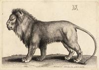 A lion standing, after Dürer