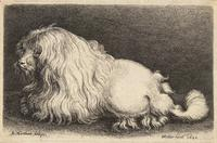 A poodle, after Matham
