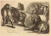 Five lions and a lioness, after Rubens