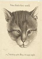 Head of a cat (middle size)