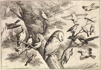 Birds mobbing an owl