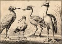 Four wading birds