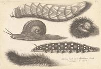 Four caterpillars and a snail