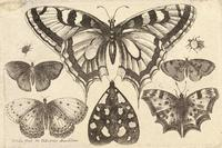 Five butterflies, a moth, and two beetles
