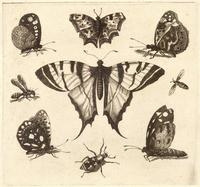 Swallow-tailed butterfly and eight other insects