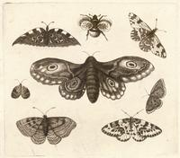 A moth, six butterflies, and a bee